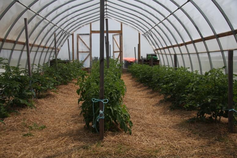 Greenhouse - Close to Home Farm